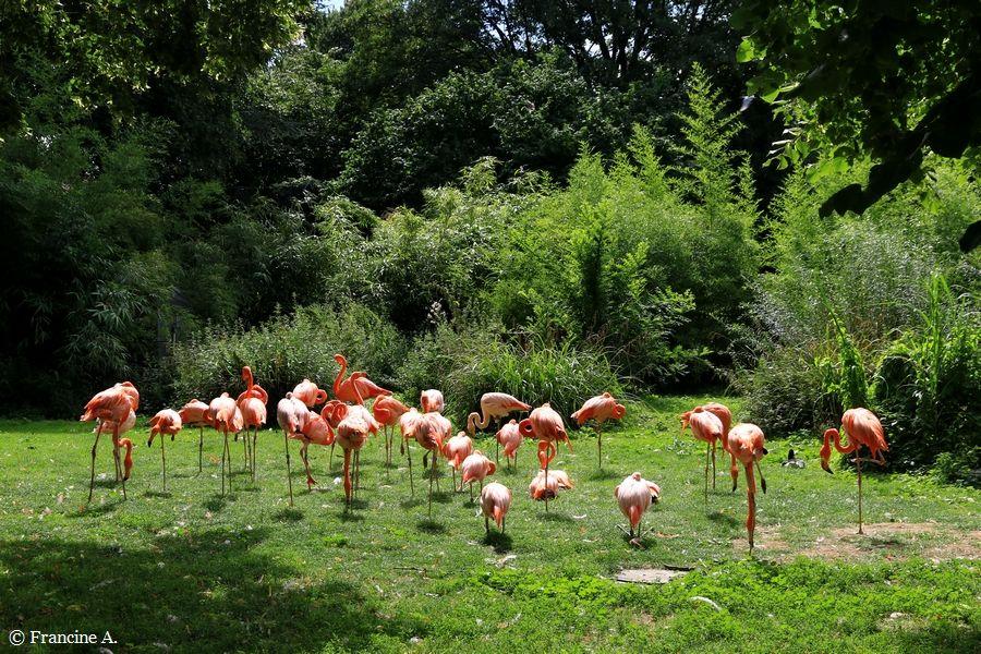 La Menagerie Le Zoo Du Jardin Des Plantes Paris 3 Paris Autrement